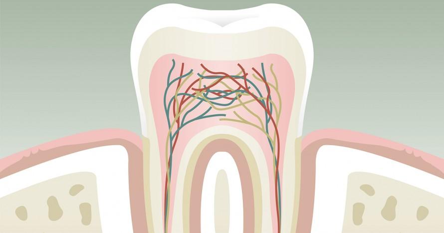 tandens kärna